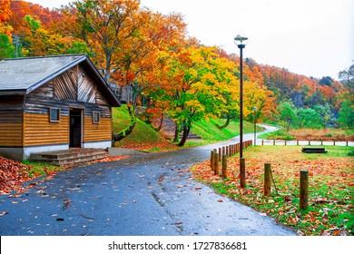 Frontage road with Green meadow and Collection of Beautiful Colorful Autumn Leaves / green, yellow, orange, red in japan