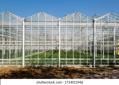 Frontal view inside of a modern industrial greenhouse for flowers and plants in the Westland, the Netherlands. Westland is a region in of the Netherlands.