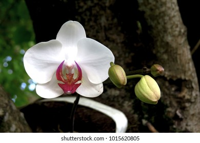 Frontal view of a orchid in a garden in south of Brazil