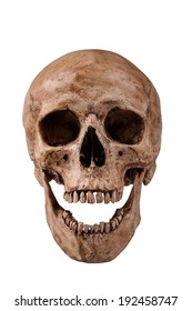 frontview of human skull open mouth on isolated white background
