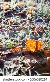 Frost birch leaves on ground at cold winter morning