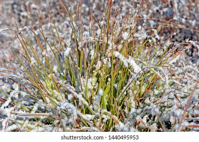 Frost covered grasses in a meadow close up background.