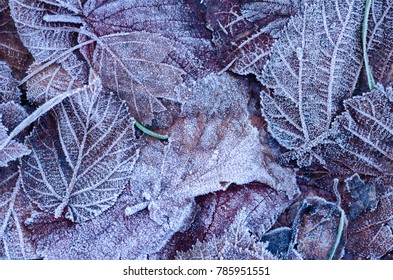 The frost covered leaves created interesting patterns