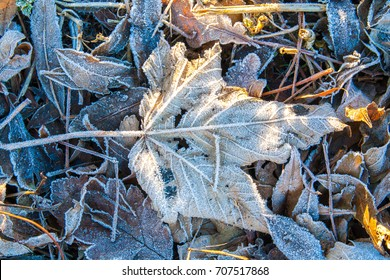 frost covered leaves lying on the ground