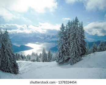 Frost covered trees seen from train of Rigi Railway after snow in autumn, Canton of Lucerne / Schwyz, Central Switzerland, Switzerland