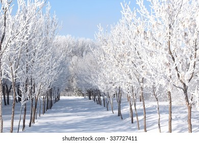 frost covered trees in winter