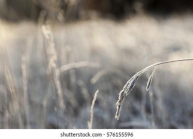 Frost covered winter landscape/Beautiful winter scene
