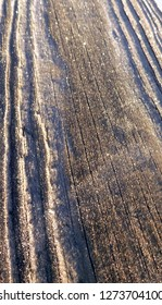 Frost covered worn wood texture