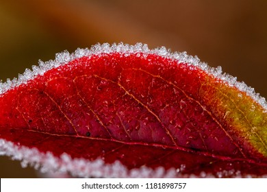 Frost crystals on flowers