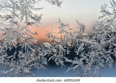 frost fern on a window on a winter morning