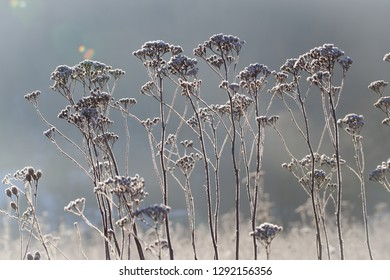 Frost on the dry grass in the morning light