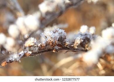 frost on flowers - Shutterstock ID 1232877577