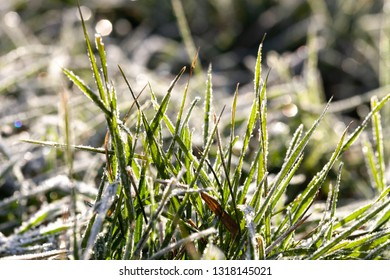 Frost on a grass and cold ground. First slight frosts. Shallow depth of field. Selective focus.