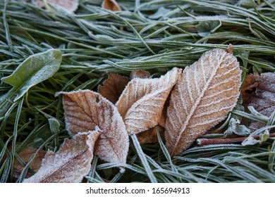 Frost on grass and dry leaves