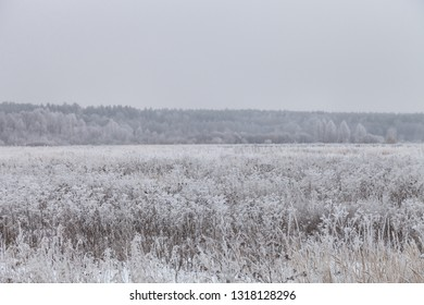 Frost on a grass. Russian provincial natural landscape in gloomy weather.