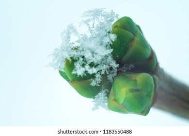 frost on green leaves in early winter with soft focus background