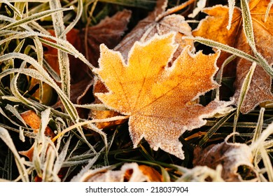 Frost on the leaf and grass.