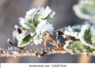 frost on the leaves - Shutterstock ID 1232877610
