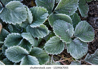 Frost on plants in late autumn.