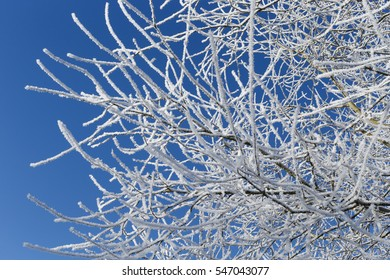 frost on tree with blue sky