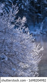 frost on trees near lake almsee, upper austria