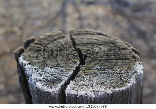 frost-on-wood-texture-blurred-600w-13150