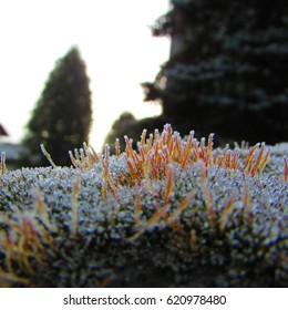 frost, snow and ice crystals on moss