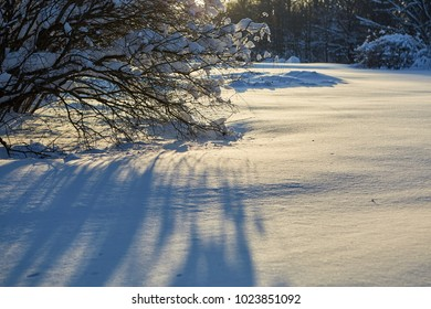 Frost and sun. Snow-Covered Park. (Moscow, Botanical garden)