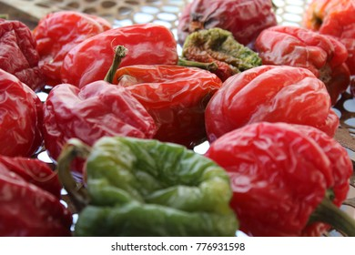 Frost winter peppers