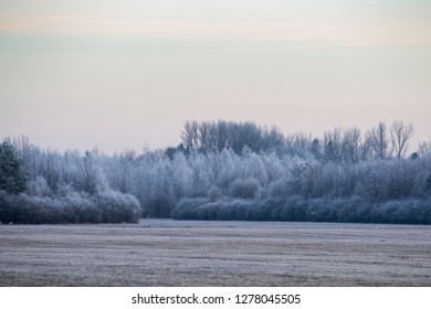 Frost-covered bushes and trees behind a meadow in winter