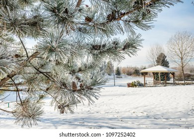 Frost-covered pine tree in a park with a gazebo in winter