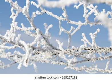 Frosted branch with clear blue sky and shallow focus