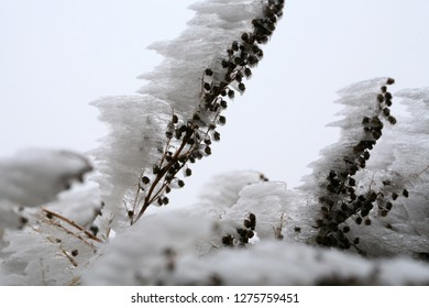 Frosted branches of tarragon. Winter in a rural, home, herb garden. Macrophotography.
