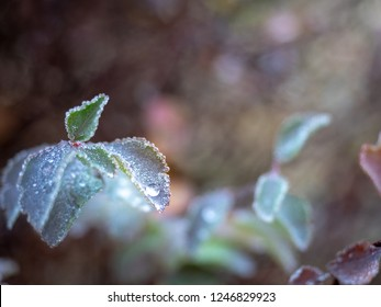 Frosted ice on leaf afrer sleet, selective focus with blur background