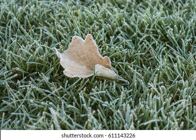 Frosted leaf in frost-covered grass