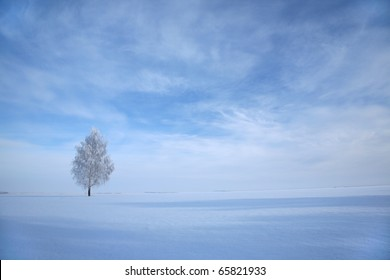 Frosted lonely birch in winter under blue sky