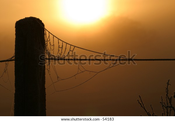 A frosted spider's web backlit by the early morning sunrise.