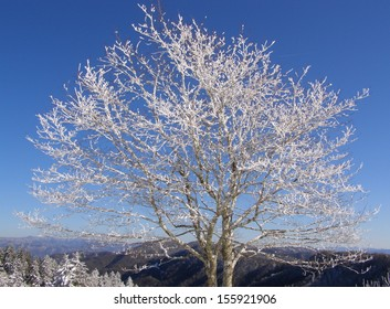 Frosted tree in the Appalachians