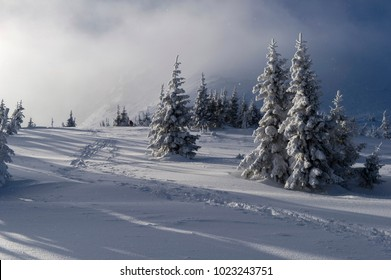 Frosted trees in high mountains