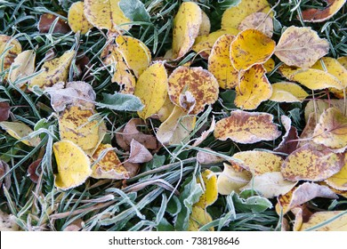 frosty autumn leaves in grasss