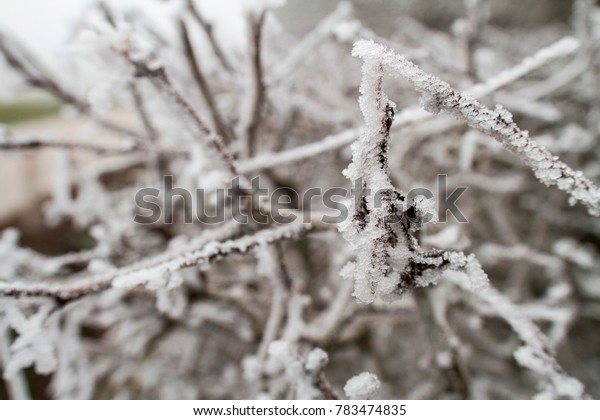 Frosty branches in the nature; some in focus and with lot of blurred branches in background; landscape medium close up shot - perfect for background texture in brochures, flyers, etc.