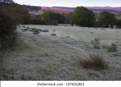 Frosty grass across a field with dawnlight on purple heather in the background. Troutbeck, Lake District, UK. October.
