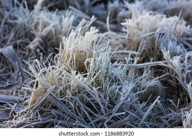 Frosty grass on the ground in winter
