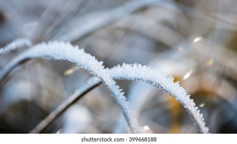 frosty grass in winter in cold morning