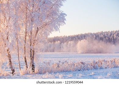 Frosty landscape. Winter morning with beautiful white trees covered by frost. Snowy nature.
