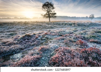 frosty misty sunrise over meadow with tree and heather