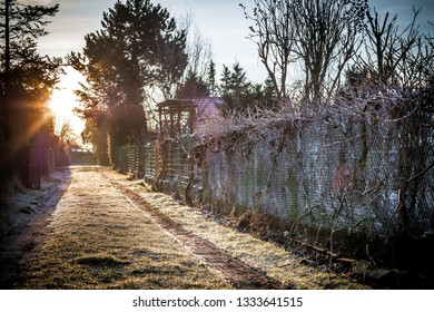 frosty morning in the countryside