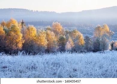 Frosty morning - Czech, Sumava