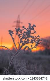 frosty morning dawn
