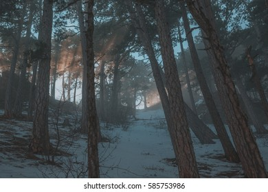 Frosty morning forest and mountains. Winter landscape foggy morning in pine forest